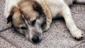 Jeste li umorni k'o pas?